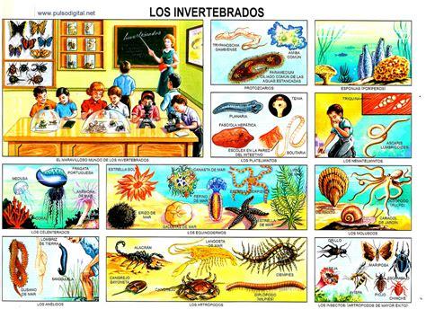 imagenes educativas gratis laminas escolares gratis para imprimir imagui