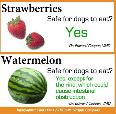 strawberries ok for dogs what your can and can t eat trusper