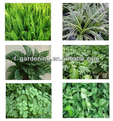 vertical garden system decorative green wall panels