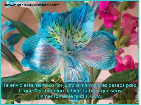 imagenes con flores y frases bonitas im 225 genes bonitas con flores y frases imagenes especiales