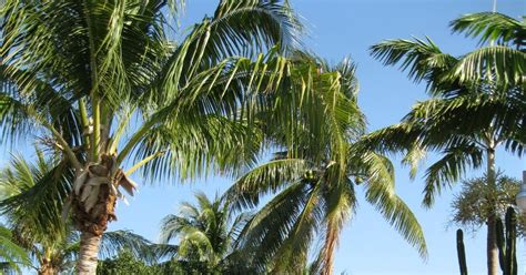 Florida Free Frugal Free Admission To 8 Florida Botanic Garden Free Day
