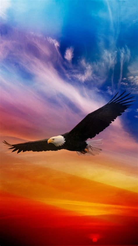 eagle wallpaper iphone hd iphonewallpapers eagle