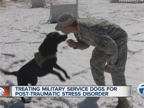dogs for ptsd treating dogs for post traumatic stress disorder wxyz