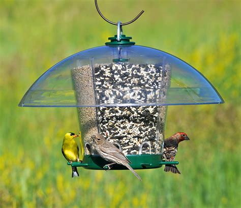 Classic Singing Bird Food pet 174 introduces the classic k feeders 174 product line