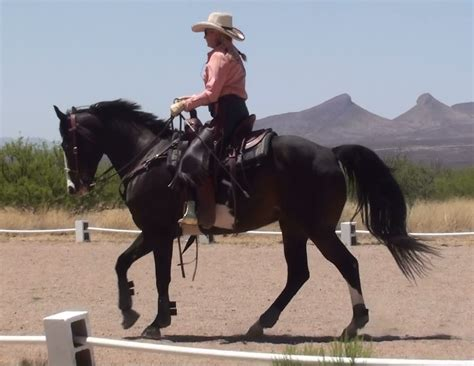 cowboy dressage and competing with kindness as the goal and guiding principle books trainer