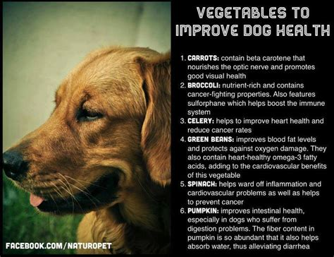 peas for dogs vegetables for dogs boxies