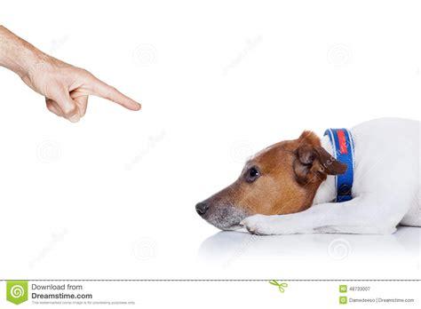 bad puppy behavior bad stock photo image 48733007