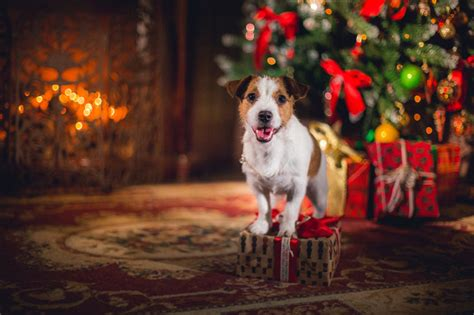 2017 holiday safety tips for your dog dogtime