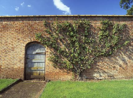 Walled Garden Nursery Door In The Walled Garden At Tyntesfield Showing A