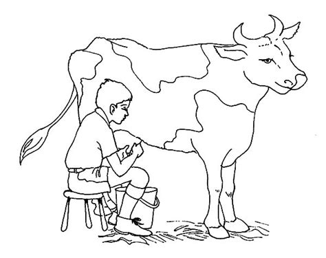 milking cow coloring page a boy milking cow coloring pages cow coloring pages with