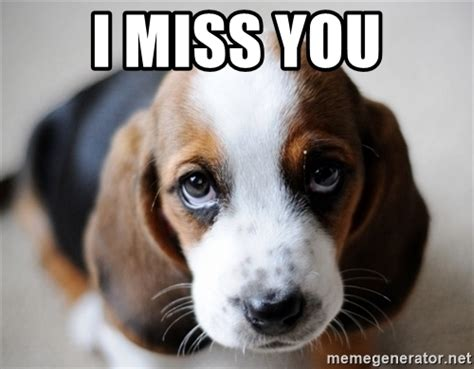 i miss you puppy image gallery i miss you puppy