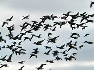 flock of birds sky bokeh 32 wallpaper 1600x1200