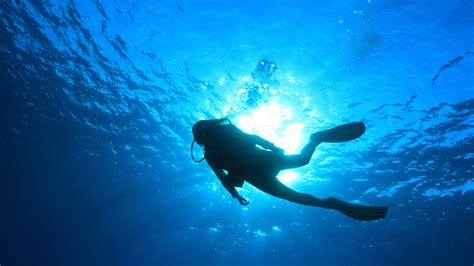 dive gratis the padi certified scuba diving center teaches and awards