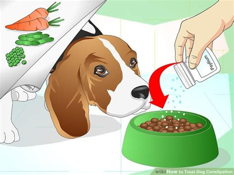constipated puppy 4 weeks how to treat constipation 9 steps with pictures wikihow