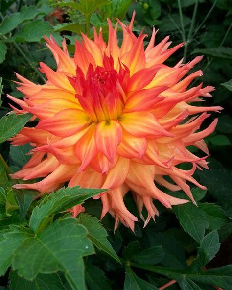 floreros kaiser dr john e kaiser flores hermosas pinterest madre