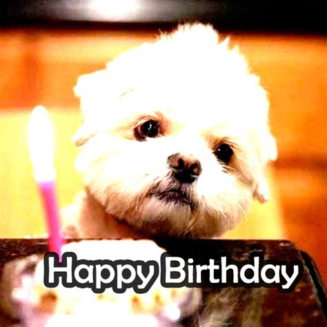 Cute Birthday Meme - the birthday thread new bioware social network fan forums