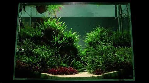 Batu Aquascape Lava Hitam Aquarium altitude aquascape by findley the of