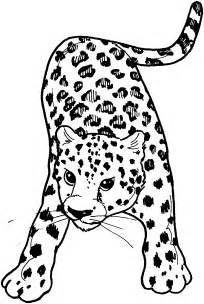 leopard color free leopard coloring pages