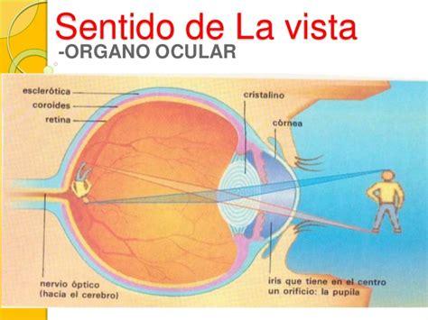 imagenes con doble sentido de vista sentido de la vista y enfermedades de la vista