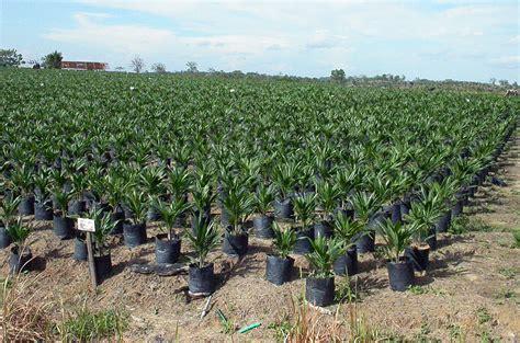 gr ne karte ev stellungnahme zum cargill schreiben palm 246 l aus indonesien