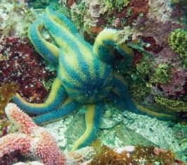 starfish colors nature blows my mind the colorful and world of