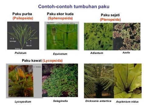 Sho Ekor Kuda pengertian ciri dan klasifikasi kingdom plantae
