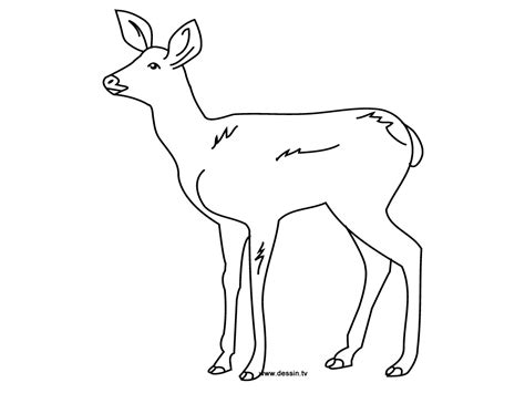 Coloring Fawn Fawn Coloring Pages