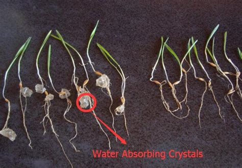 water absorbing water absorbing crystals make plants grow better