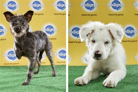 puppy bowl puppies 2017 the puppy bowl will feature three special needs dogs this year