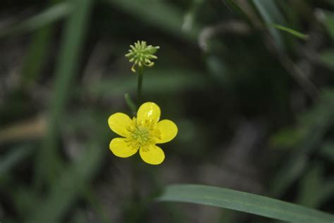 small yellow flowers by tinseltowntommy on deviantart