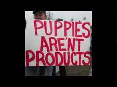 pet stores in maine that sell puppies no more mill pups kittens in maine pet stores help maine ban the sales of mill