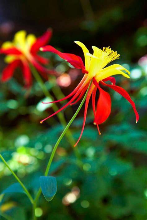 popular spring flowers homelife 12 best spring flowers