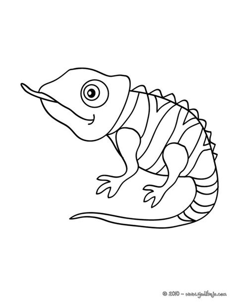 chameleon lizard coloring pages colorear camaleon 1