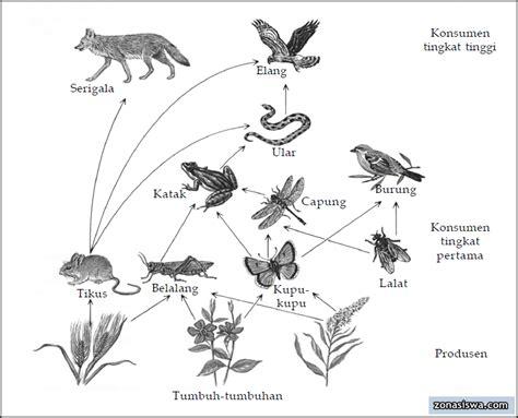 jaring makanan penjelasan contoh gambar
