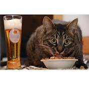 Funny Cat Drinking Wine &amp Eating Food &gt 9 Wallpapers Hd