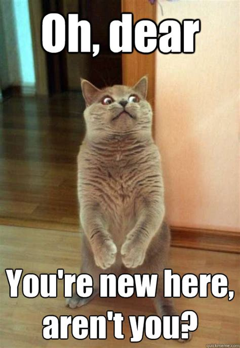 New Cat Memes - oh dear you re new cat meme cat planet cat planet