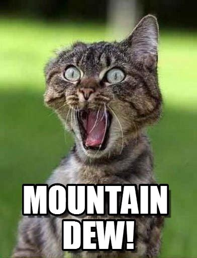 Mountain Dew Meme - mountain dew screaming cat meme on memegen