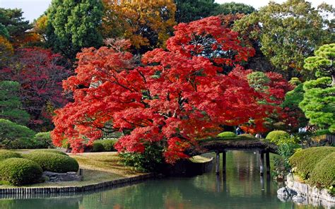 themes for windows 7 japan autumn color in japan windows 7 theme herbstimpressionen