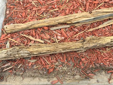 Landscape Timbers Termites Top 10 Tips For Termite