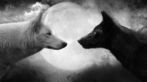 Black And White Wolf Wallpaper | wolf hd wallpapers