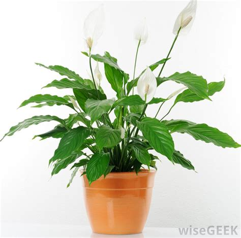 best house plant how do i choose the best indoor house plants with pictures