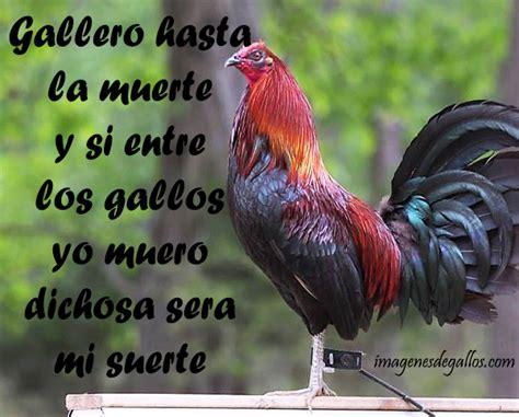 imagenes con frases de galleros imagenes de gallos finos con mensajes bonitos imagenes