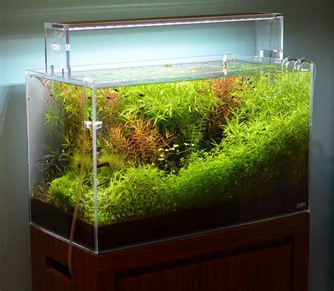 design inspired by nature aquarium aquarium zen