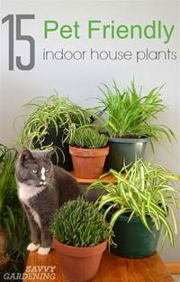 Flowers Poisonous Cats - common house plants not poisonous to cats