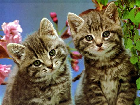 wallpaper cats animals i love animals images cats hd wallpaper and background