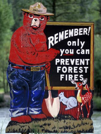 Only You Can Prevent Forest Fires Meme - smokey the bear superradnow