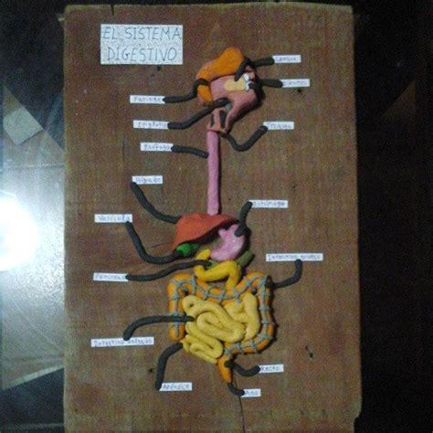como aser sistema circulatorio con materiales reciclables el sistema digestivo en plastilina ccnn pinterest