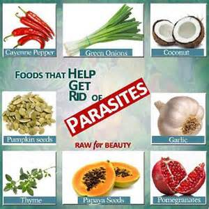 effective ways to get rid of parasites naturally healthysoon
