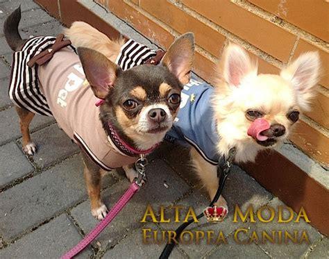 apartamentos en madrid alquiler por d 237 as tienda canina alta moda canina