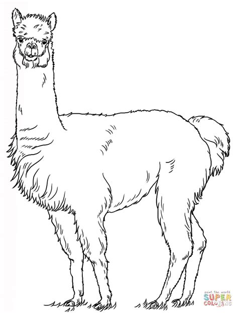 alpaca coloring page free printable coloring pages